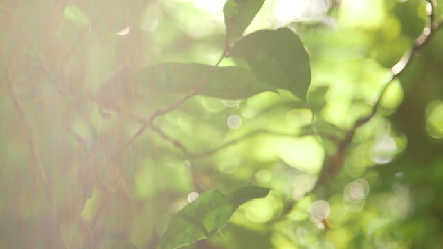 Leaves and foliage lens flare