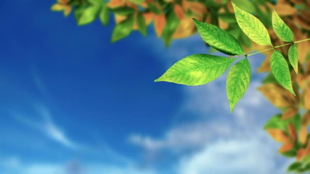 vídeos y material grabado en eventos de stock de hojas y cielo - árbol de hoja caduca