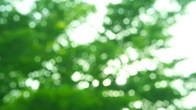葉とサンビームズ