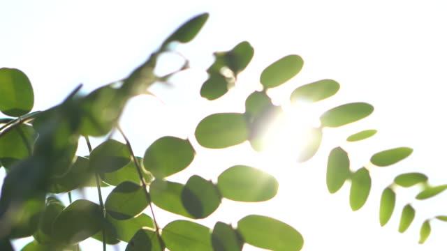 葉と日光 - 木漏れ日点の映像素材/bロール