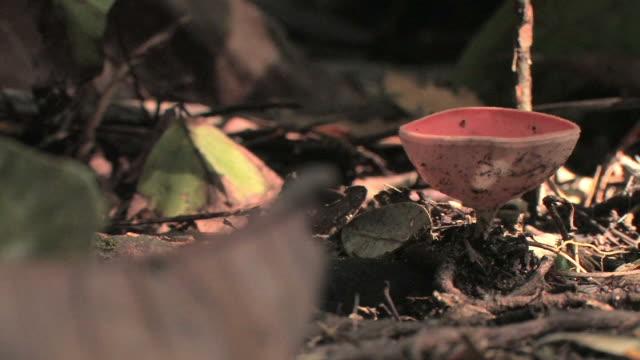 cu leaves and vegetation on rainforest floor/ manu national park, peru - fungus stock videos & royalty-free footage