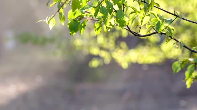 葉の明るい太陽の下でます。 - brightly lit点の映像素材/bロール