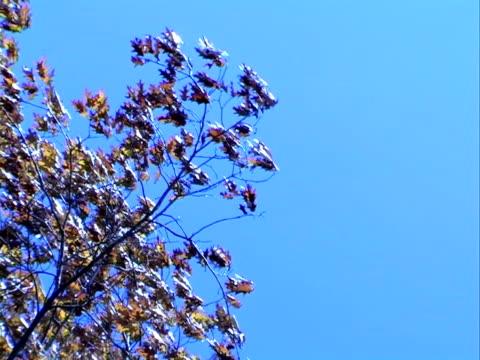 vídeos y material grabado en eventos de stock de hojas soplando en el viento. progressiv bastidores - árbol de hoja caduca