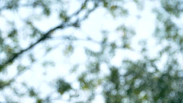 vídeos de stock, filmes e b-roll de deixa o borrão do bokeh com o sol que pico através das folhas - árvore de folha caduca
