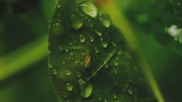vídeos y material grabado en eventos de stock de hojas de primer plano - rama parte de planta