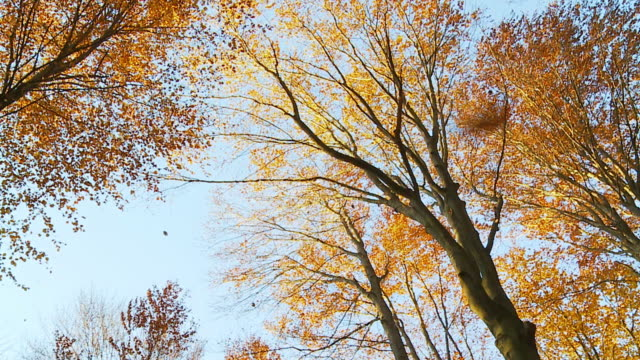 stockvideo's en b-roll-footage met hd slow motion: leaves falling from trees - herfst