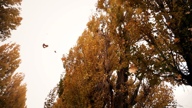 leaves falling from trees - foglia video stock e b–roll