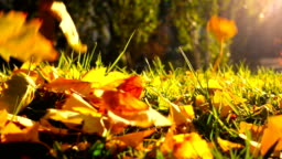 Leaves falling on grass in autumn