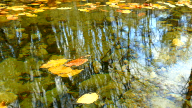 leaves floating in the mirror forest pond
