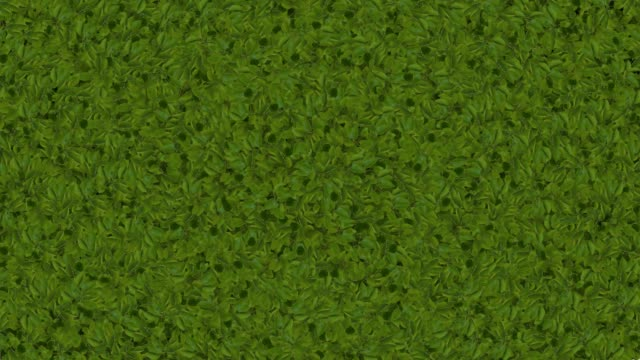 leaves form on screen for transition or background - grass family stock videos & royalty-free footage