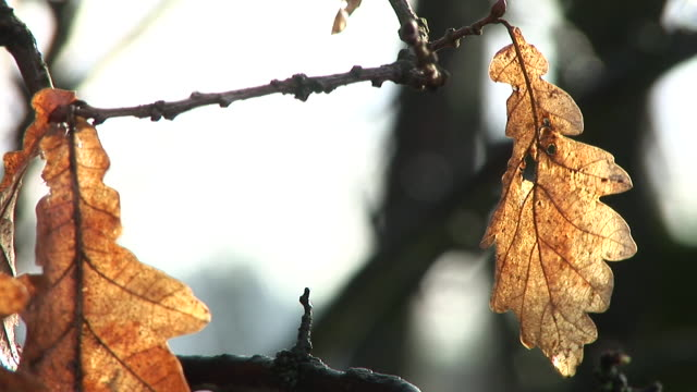 hd: leaves in autumn - deciduous stock videos & royalty-free footage