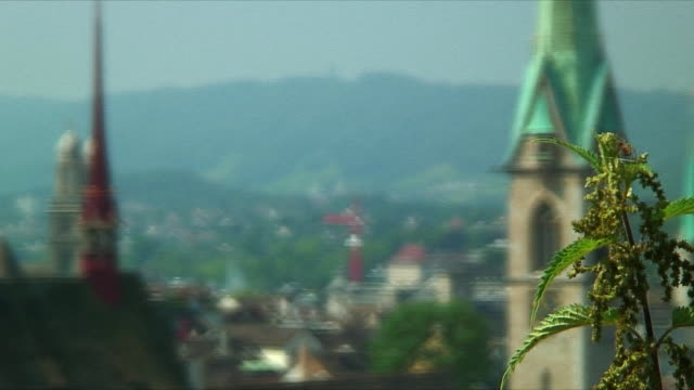 MS R / F Leaves in foreground and cityscape with steeples in background / Zurich, Switzerland