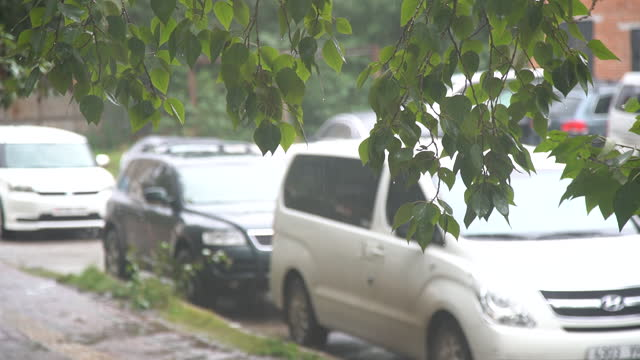 leaves in rainy day / mongolia - medium group of objects stock videos & royalty-free footage