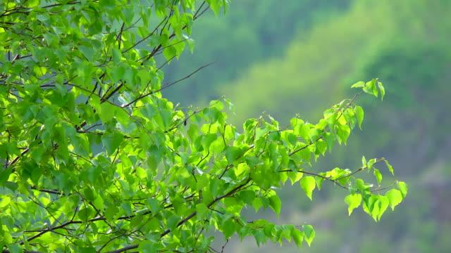 vidéos et rushes de feuilles dans la forêt. - branche partie d'une plante