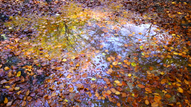 leaves of beech on the water - comunidad foral de navarra stock videos and b-roll footage