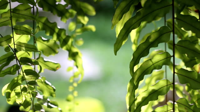 Leaves of green ferns for background