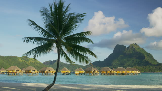 leaves of palm tree blowing in wind on tropical beach near bungalows / bora bora, french polynesia - french polynesia stock videos & royalty-free footage