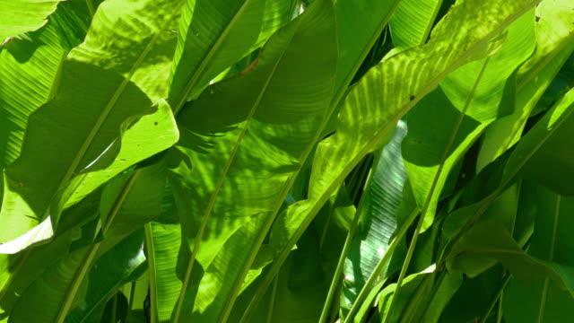 cu leaves of tropical plant, ubud, bali, indonesia - ubud district stock videos & royalty-free footage