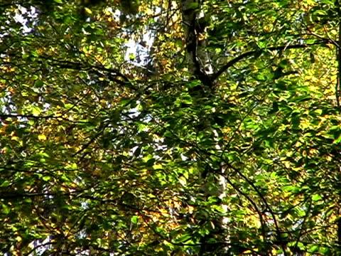 vídeos y material grabado en eventos de stock de hojas de árbol - árbol de hoja caduca