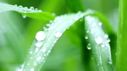 Leaves on the raindrops with green background