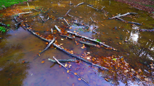 leaves on the water - comunidad foral de navarra stock videos and b-roll footage