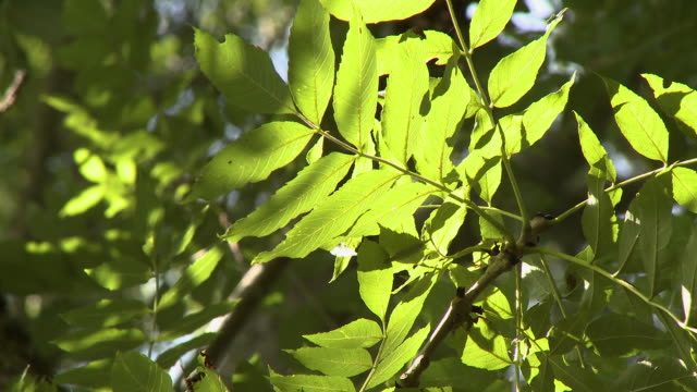 leaves on vine and limbs - grove stock videos & royalty-free footage