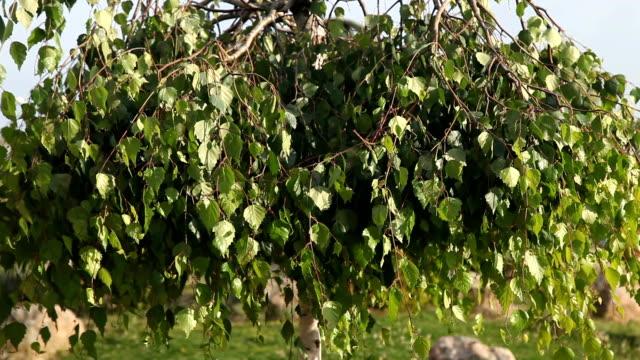 vídeos y material grabado en eventos de stock de hojas en el viento - balancearse