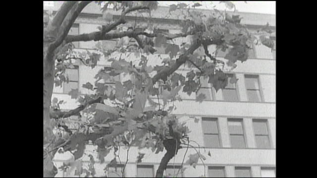 leaves wave in the wind near an office building in the marunouchi district of tokyo, japan. - furzen stock-videos und b-roll-filmmaterial