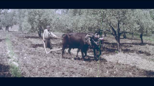1968 lebanese countryside - pflug stock-videos und b-roll-filmmaterial