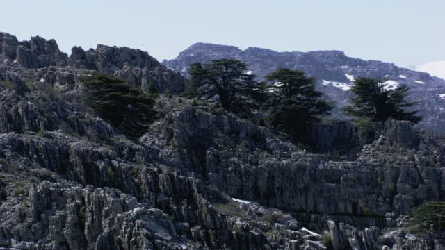 lebanon : cedars of lebanon - ヒマラヤスギ点の映像素材/bロール