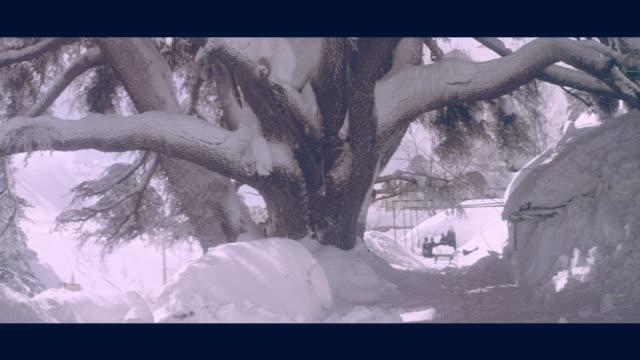 1968 lebanon - snow covered cedar trees - cedar stock videos & royalty-free footage