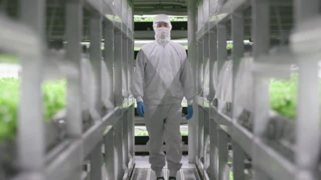 stockvideo's en b-roll-footage met lechugas cultivadas con luz artificial: en los alrededores de las ciudades japonesas van de la tierra a las fabricas de verduras automatizadas para... - agricultura