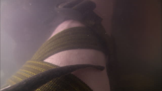 a leech moves over a man's submerged leg that is wrapped in webbing. - eingewickelt stock-videos und b-roll-filmmaterial