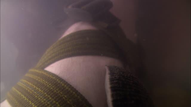 vídeos de stock e filmes b-roll de a leech under water attaches itself to a man's leg and swells as it sucks his blood. - territórios ultramarinos franceses