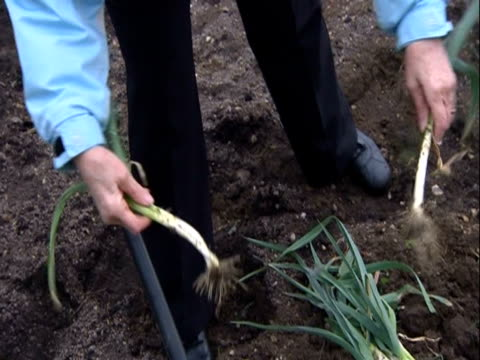 leeks being separated in an allotment - recreational pursuit stock videos & royalty-free footage