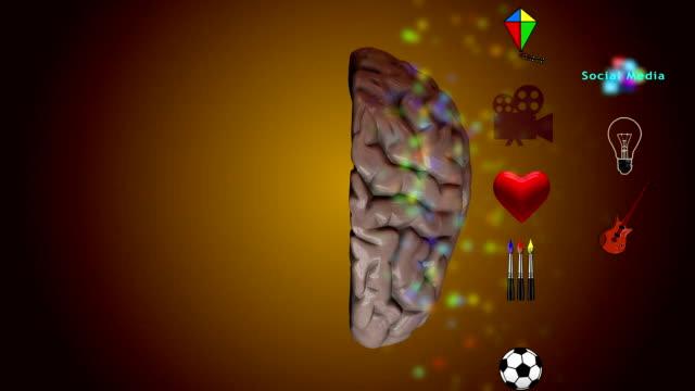 vídeos de stock, filmes e b-roll de esquerdo e direito do cérebro - telencéfalo