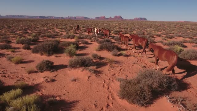 left side tracking close and low wild horses, drone aerial 4k, monument valley, valley of the gods, desert, cowboy, desolate, mustang, range, utah, nevada, arizona, gallup, paint horse .mov - paint horse stock videos & royalty-free footage