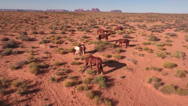 left to right orbit and pull away wild horses, drone aerial 4k, monument valley, valley of the gods, desert, cowboy, desolate, mustang, range, utah, nevada, arizona, gallup, paint horse .mov - paint horse stock videos & royalty-free footage
