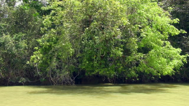 stockvideo's en b-roll-footage met left to right panning shot of panama canal mangrove - panama
