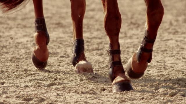 SLO MO TS Legs of a brown horse trotting in a sunny arena