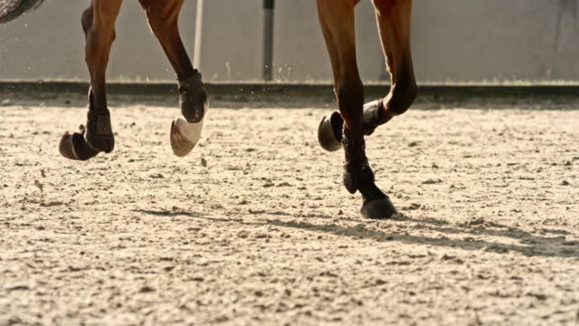 SLO MO DS Legs of a chestnut horse running in a sunny arena