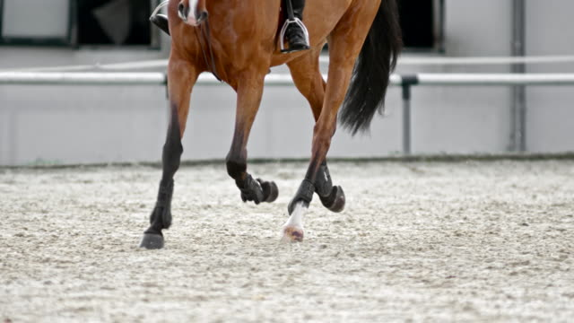 SLO MO DS Legs of a chestnut horse running in an arena