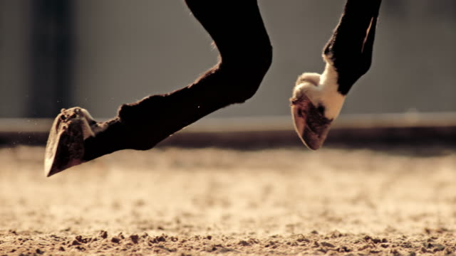 slo mo ts legs of a horse galloping in the sunny arena - ウマ点の映像素材/bロール