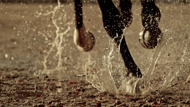SLO MO Legs of a horse galloping on wet ground
