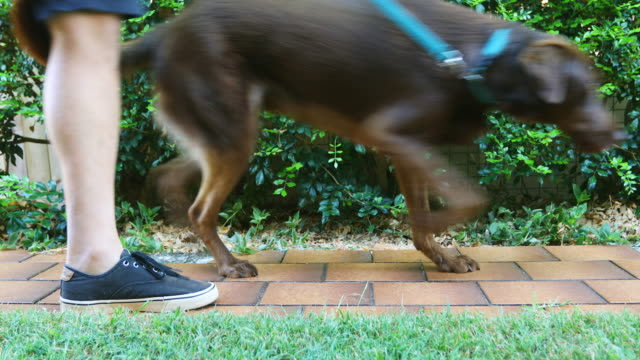 legs of a man walking on a path with a dog - dog walking stock videos & royalty-free footage