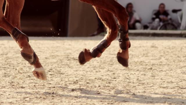 vídeos de stock, filmes e b-roll de slo mo ts pernas de cavalo galopando sob o sol - animal de trabalho