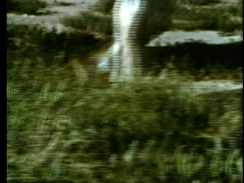 stockvideo's en b-roll-footage met 1963 reenactment cu ts legs of white horse / 1830s texas / audio - manifest destiny