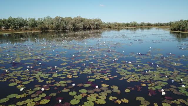 leichhardt lagoon - lily stock videos & royalty-free footage