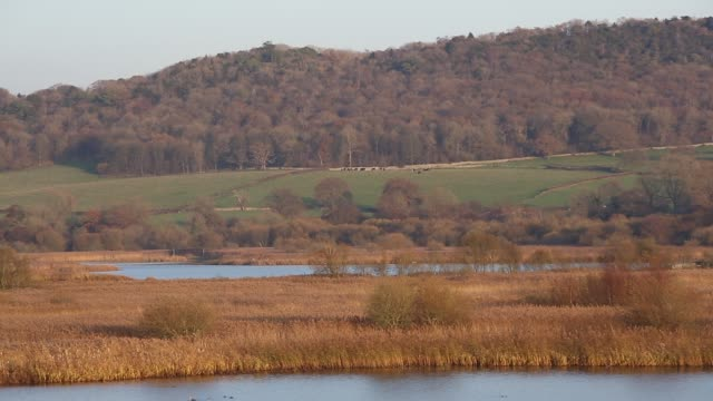 leighton moss rspb reserve in lancashire, uk. - 自然保護区点の映像素材/bロール
