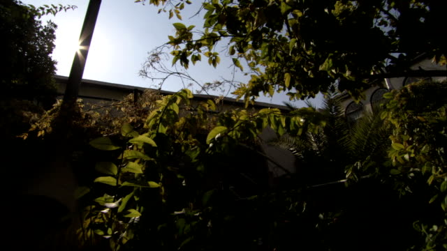 lemon and orange trees grow in a courtyard in damascus. available in hd. - courtyard stock videos and b-roll footage